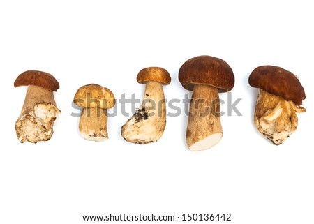 Fresh and beautiful mushrooms on a white background