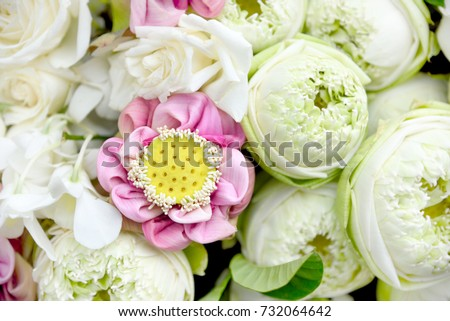 Fresh And Beautiful White Pink Lotus Flower Background For Wedding SceneTop View Or