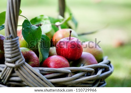 Fresh and colorful apples in basket, selective focus - stock photo