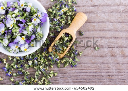 Fresh and dried flowers from field pansy  / small, violet heartsease/ Viola arvensis