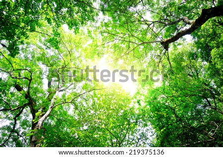Fresh and green leaves. Beams of the sun - stock photo