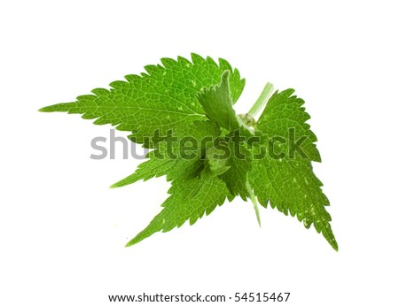 fresh and green nettle isolated on white background - stock photo