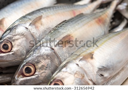 Fresh and raw silver tuna or mackerel fishes for a healthy diet background  - stock photo