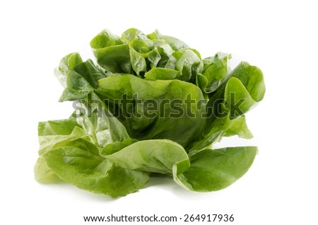 fresh and wet round lettuce on isolated white background - stock photo
