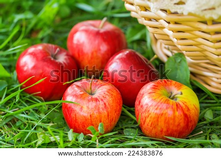 Fresh apples in nature - stock photo