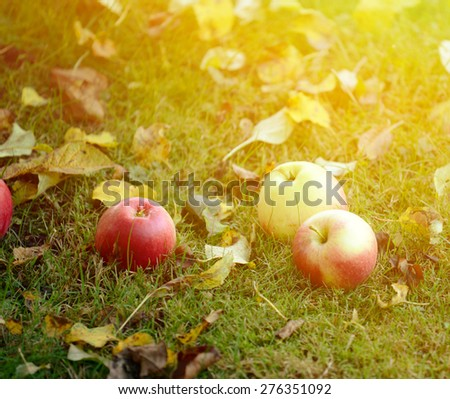 Fresh apples on grass - stock photo