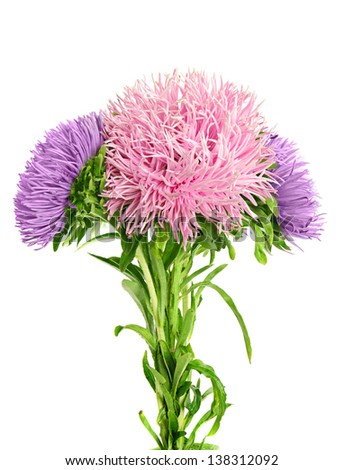 Fresh aster   flower in boquet  isolated on white - stock photo
