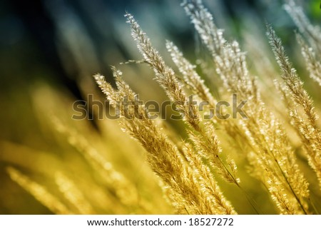Fresh autumn grass (shallow DoF) - stock photo
