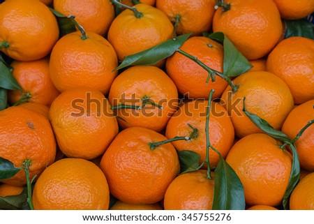 Fresh autumn harvest of clementines  - stock photo