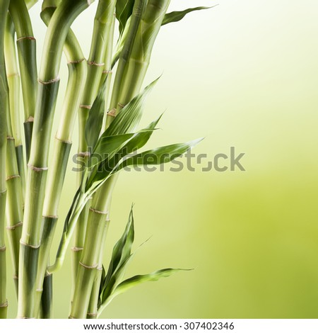 Fresh Bamboo - stock photo