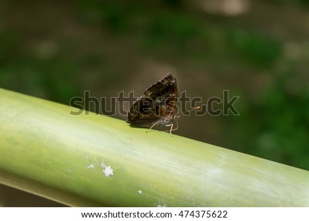 Fresh bamboo and butterfly