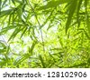 Fresh bamboo leaves border, green plant stalk at summer in the garden. - stock photo
