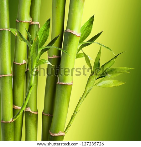 Fresh Bamboo on colorful background