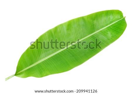 Fresh Banana Leaf - stock photo