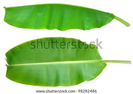 Banana Leaf Illustration Fresh Banana Leaf Isolated