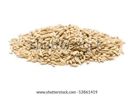 fresh barley on white background