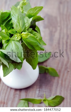 Fresh basil in a white vase on the wooden table