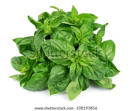 Fresh basil leaves isolated on white background - stock photo