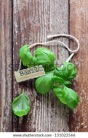 Fresh basil leaves lying on grungy wooden boards with a decorative identification label or name tag - stock photo