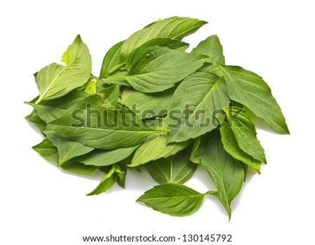 Fresh basil leaves on a white background