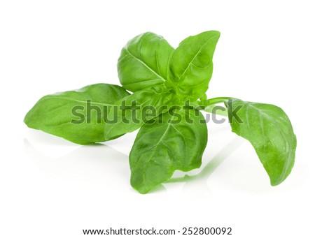 fresh basil on white background - stock photo
