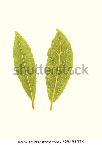 Fresh Bay Leaves - stock photo