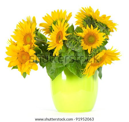 fresh beautiful sunflowers in a green pot - stock photo