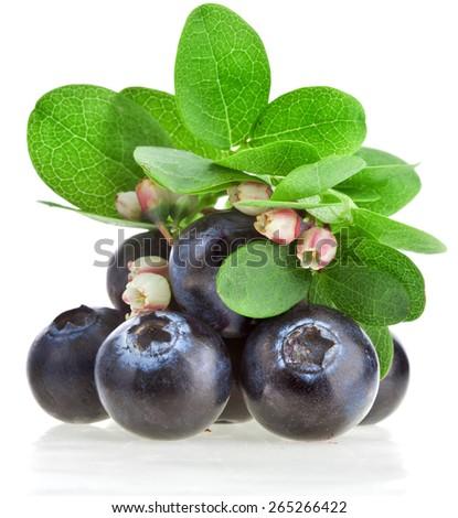 Fresh berry blueberries  flowering close up macro isolated - stock photo