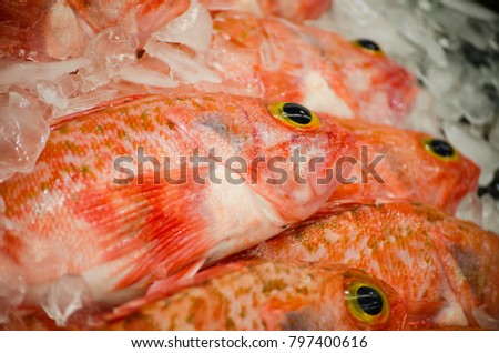 Ocean perch stock images royalty free images vectors for Ocean perch fish