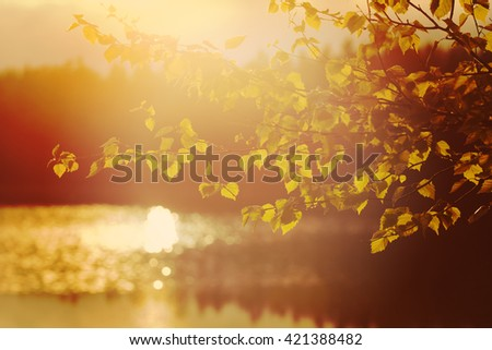Fresh birch leaves after the heavy rain in the sunset. Scenery is reflected from the water. Image taken in Finland and image has a vintage effect. - stock photo