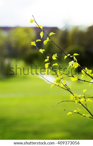 Fresh birch leaves is about to grow full size during spring time. The summer is already here. Image has a vintage effect applied. - stock photo