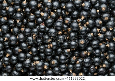 Fresh Black Currant. Background. Close-up. Top View.