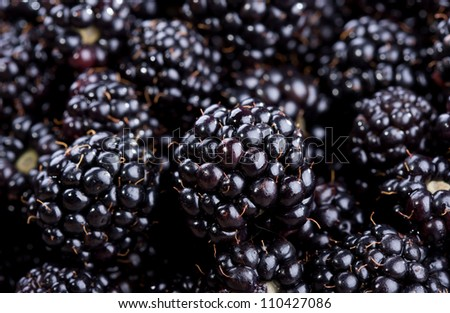 fresh blackberries as background