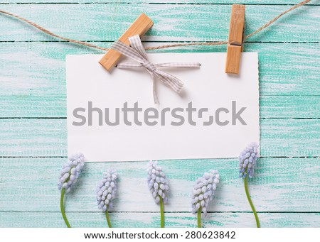 Fresh   blue spring muscaries  and empty tag on clothes line on turquoise  painted wooden background. Selective focus. Place for text.  - stock photo