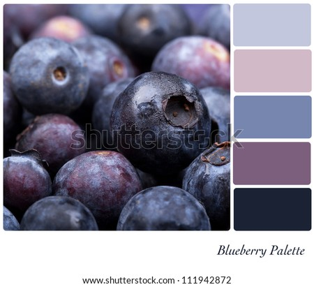 Fresh blueberry background colour palette with complimentary swatches. - stock photo