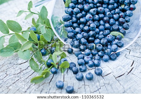 fresh blueberry on wooden background with green leaves - stock photo