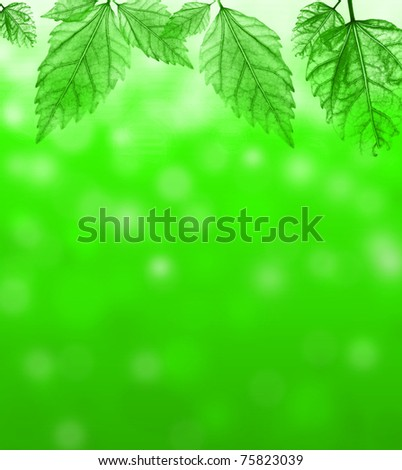 Fresh blur background with transparent green leaves