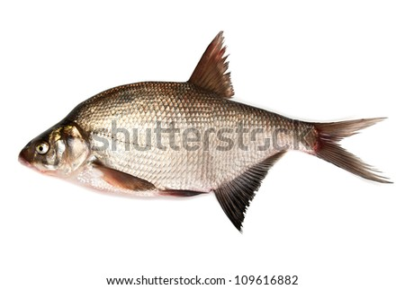 Fresh bream fish on a white background - stock photo