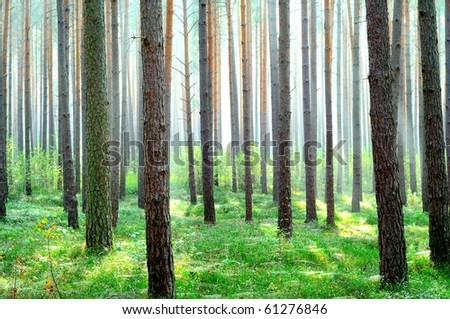 Fresh bright green forest - stock photo