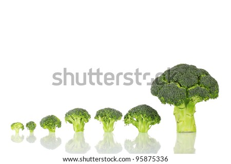 Fresh broccoli in line isolated on white - stock photo