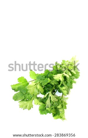 fresh bunch of coriander on a light background - stock photo