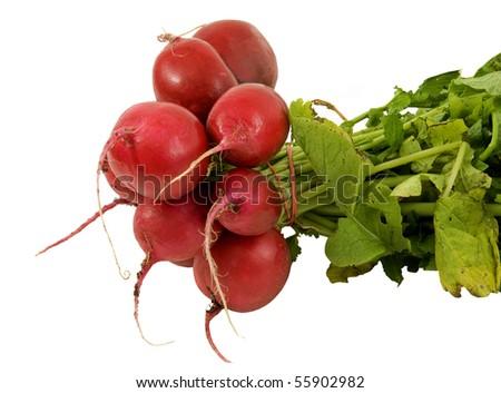 fresh bunch of  large radish on a white background - stock photo