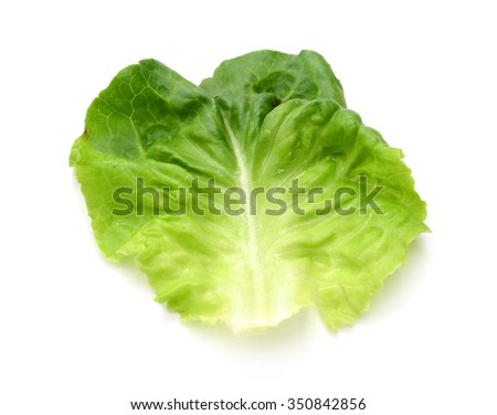 fresh cabbage and lettuce on white background