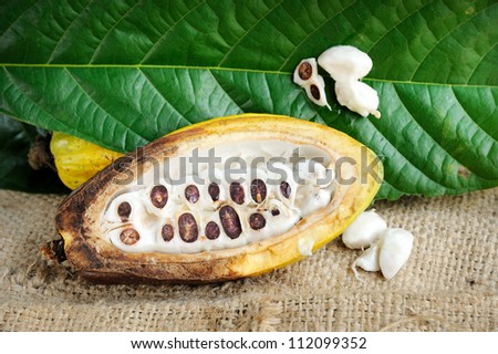 Fresh cacao fruits with leaf on texture background, selective focus. - stock photo