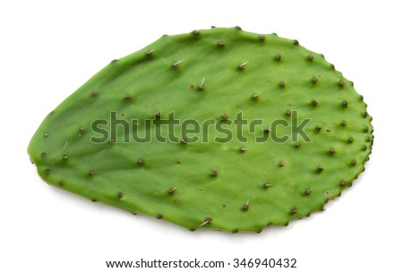 fresh cactus leaf on white background  - stock photo