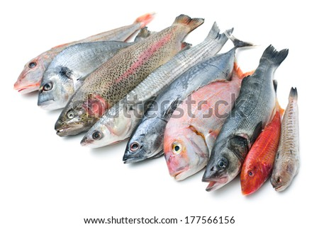 Fresh catch of fish  isolated on white background - stock photo