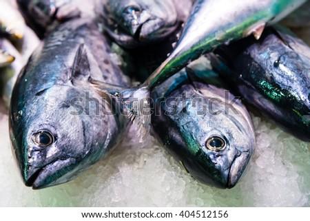 fresh caught fish on display at a market - stock photo