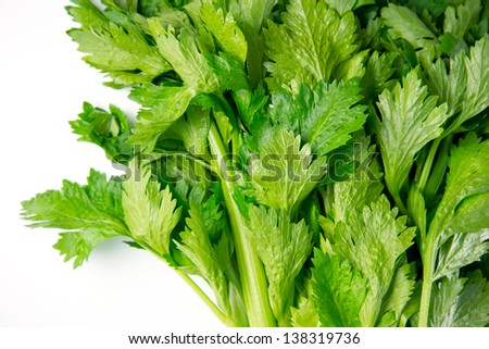 Fresh celery leaves, isolated on white. - stock photo
