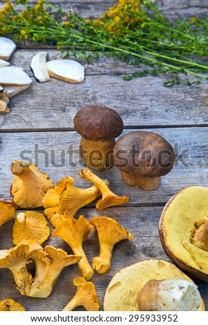 Fresh Chanterelle and Boletus Edilus mushrooms on a wooden table and slices of dried ones, mountain tea Perforate St John's-wort - stock photo