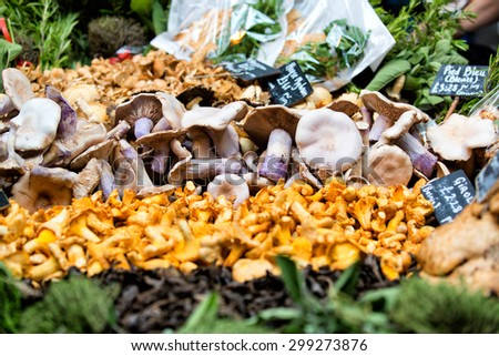 Fresh chanterelles and Cauliflower mushroom exposed in baskets on the market. - stock photo